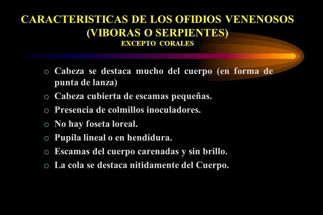 CARACTERISTICAS DE LOS OFIDIOS VENENOSOS (VIBORAS O SERPIENTES) EXCEPTO CORALES
