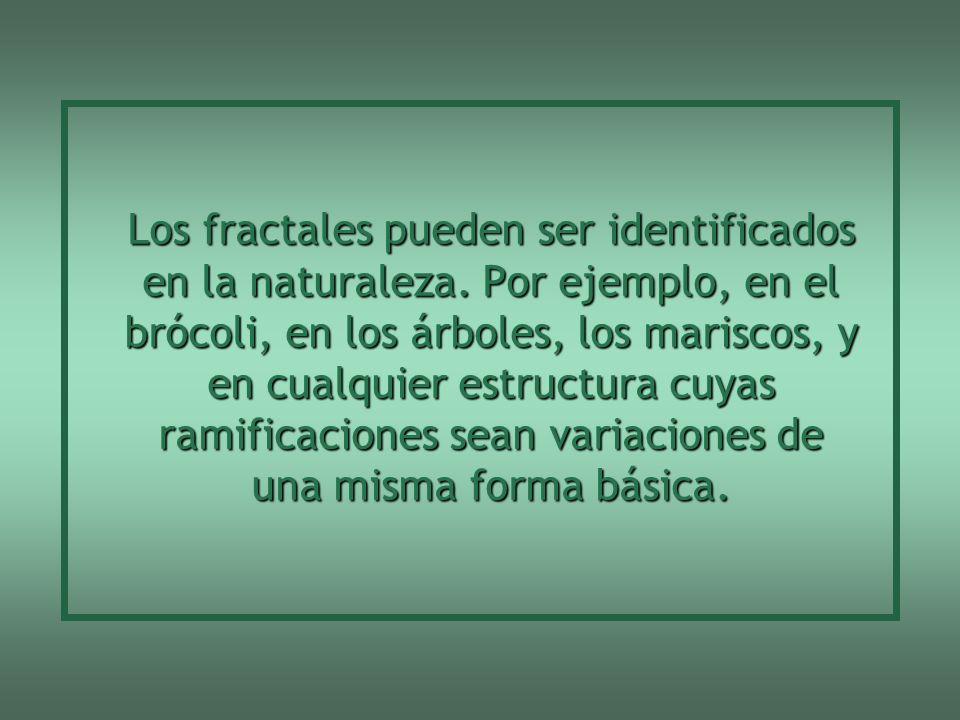 Los fractales pueden ser identificados en la naturaleza
