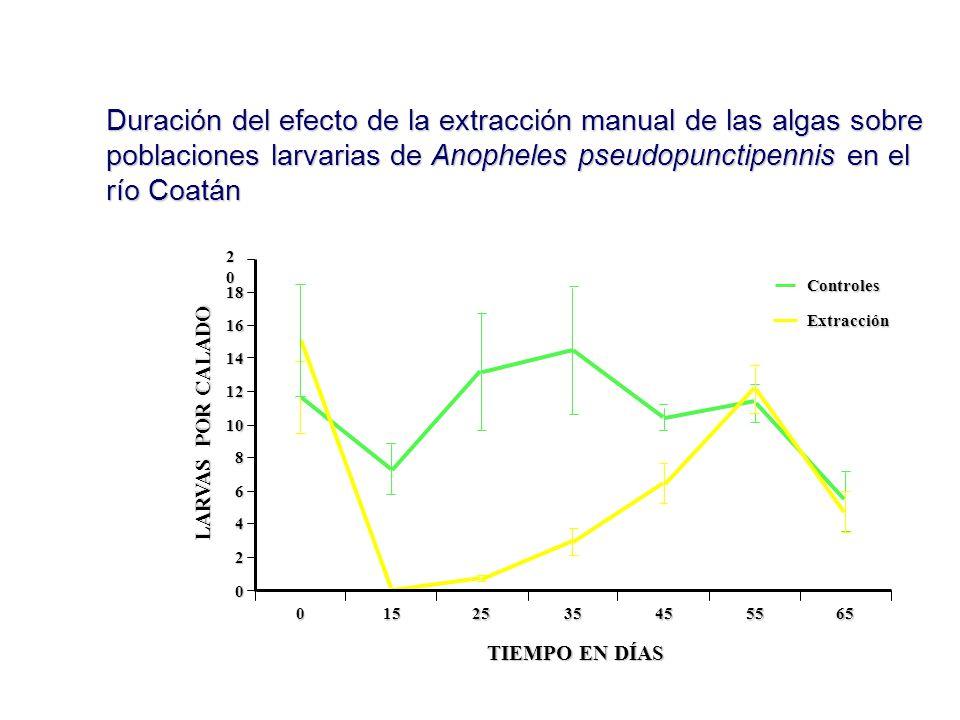 Duración del efecto de la extracción manual de las algas sobre poblaciones larvarias de Anopheles pseudopunctipennis en el río Coatán