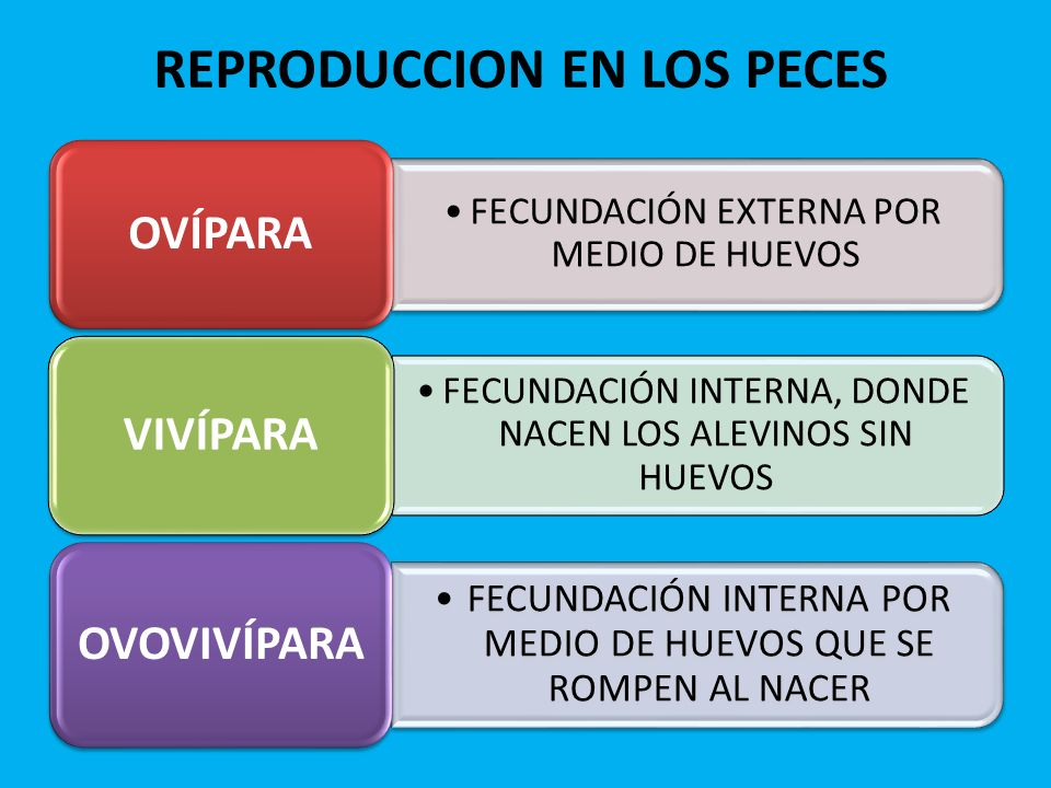 Biologia de peces ppt video online descargar for Reproduccion en peces