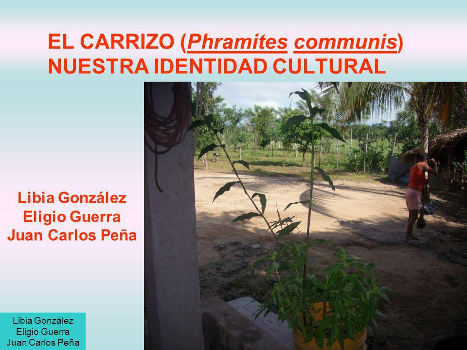 EL CARRIZO (Phramites communis) NUESTRA IDENTIDAD CULTURAL