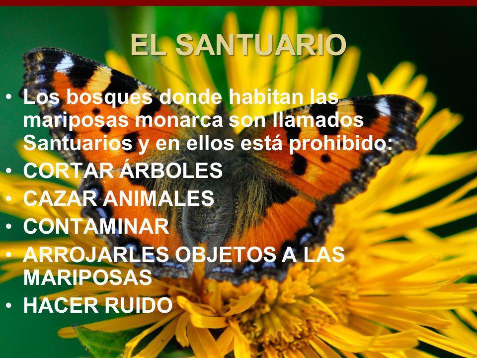 INICIO EL SANTUARIO. Los bosques donde habitan las mariposas monarca son llamados Santuarios y en ellos está prohibido: