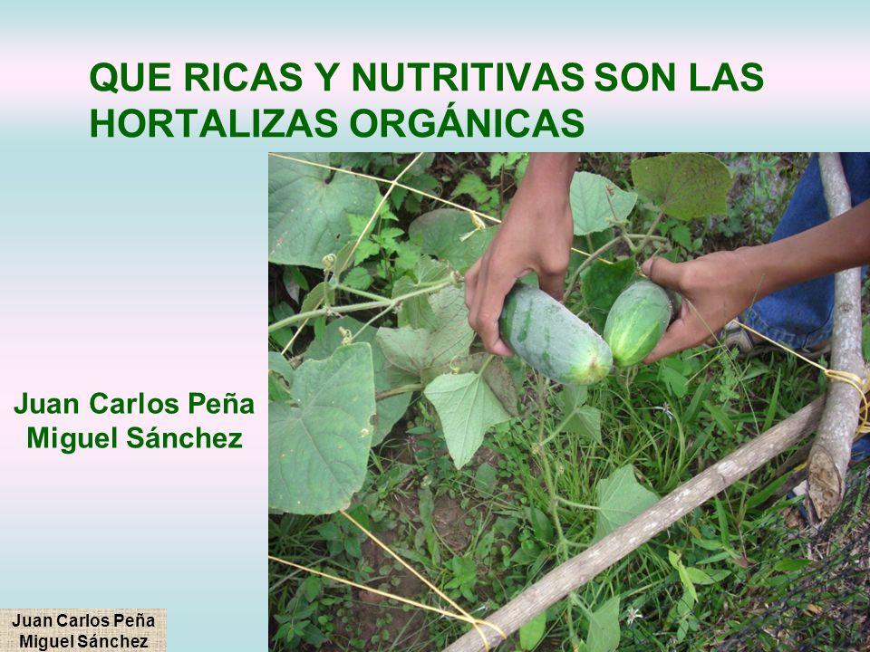 QUE RICAS Y NUTRITIVAS SON LAS HORTALIZAS ORGÁNICAS