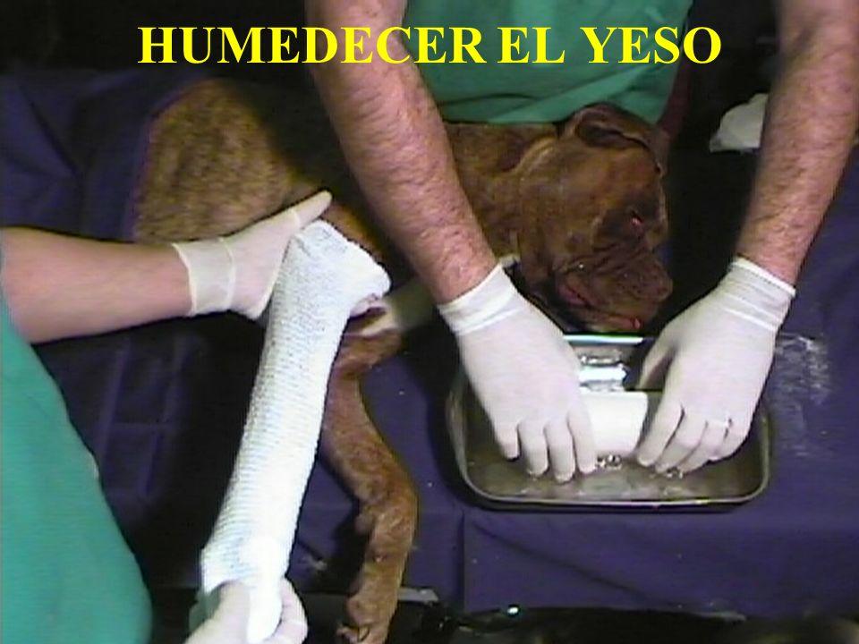 HUMEDECER EL YESO IVOT