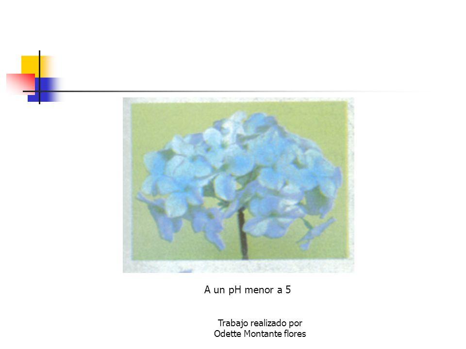 Trabajo realizado por Odette Montante flores