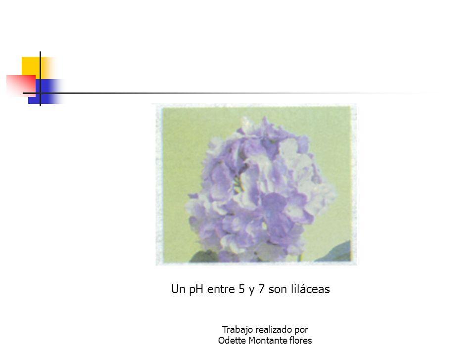 Un pH entre 5 y 7 son liláceas