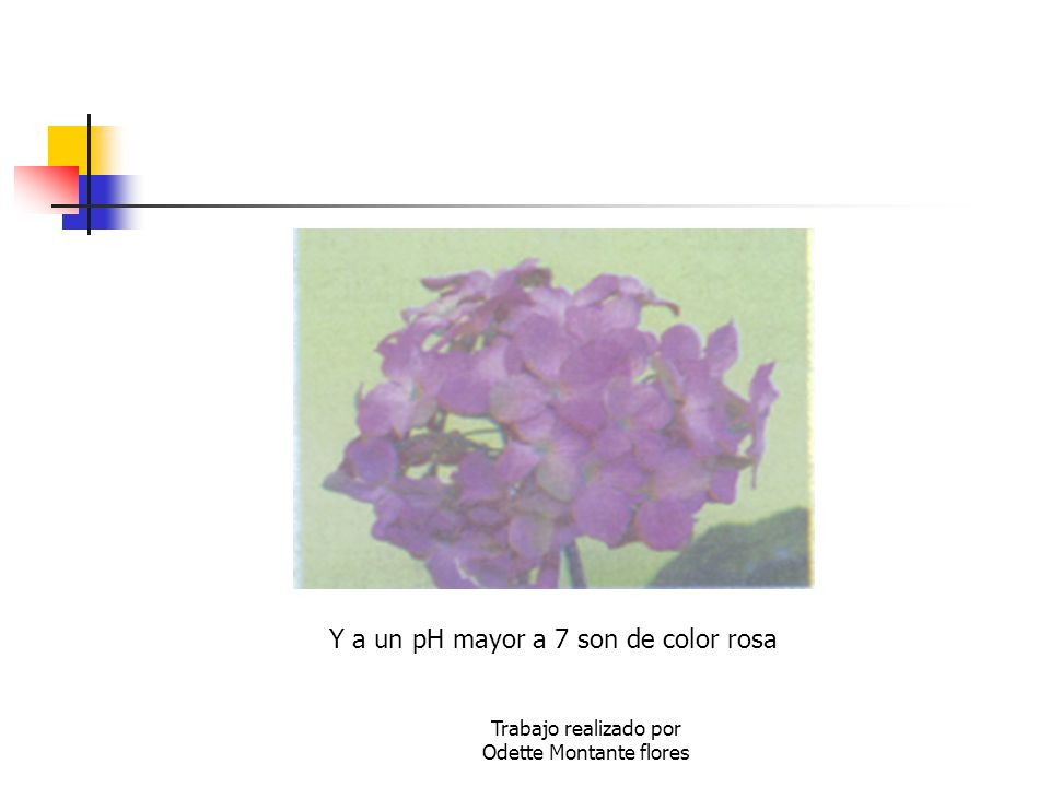 Y a un pH mayor a 7 son de color rosa