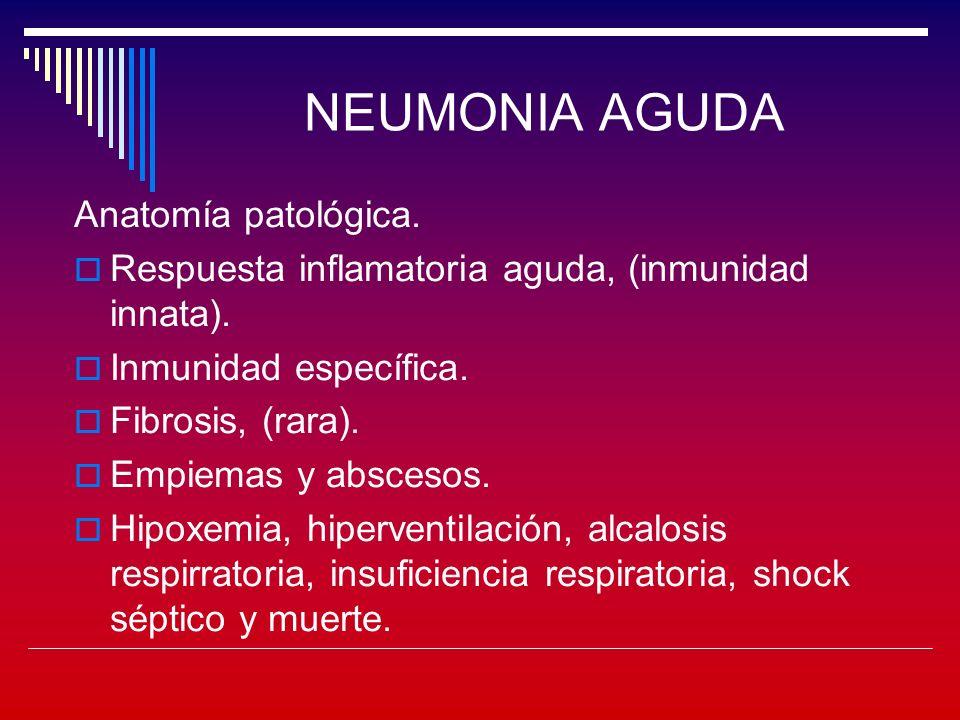 NEUMONIA AGUDA Anatomía patológica.