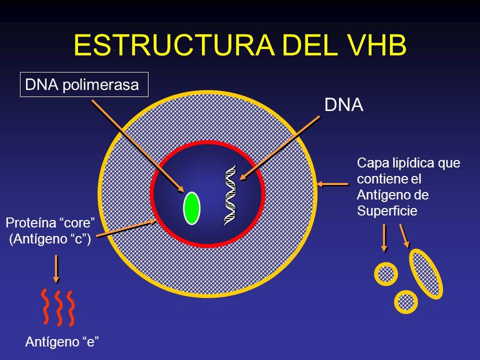 Proteína core (Antígeno c )