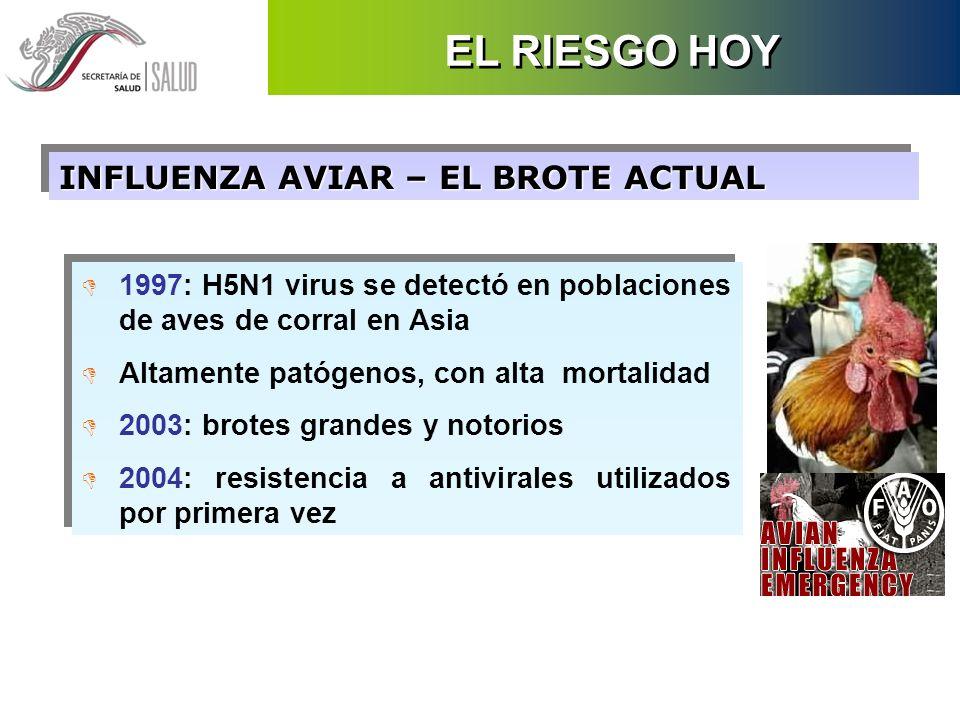 EL RIESGO HOY INFLUENZA AVIAR – EL BROTE ACTUAL