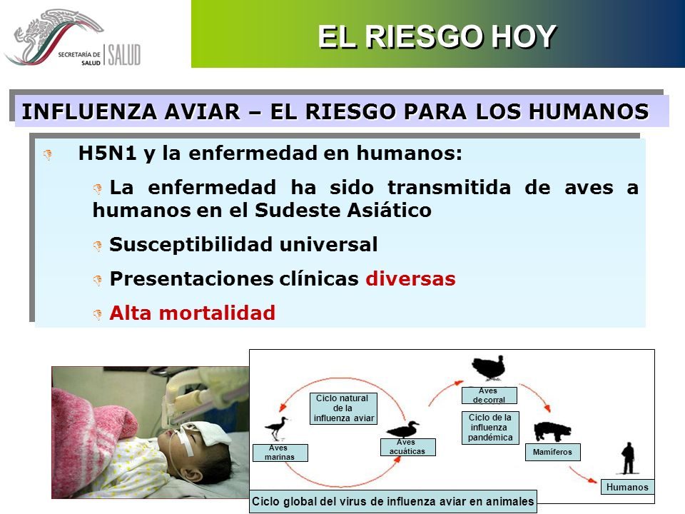 Ciclo global del virus de influenza aviar en animales
