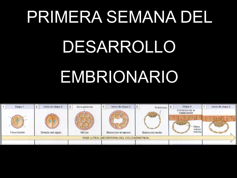 PRIMERA SEMANA DEL DESARROLLO EMBRIONARIO