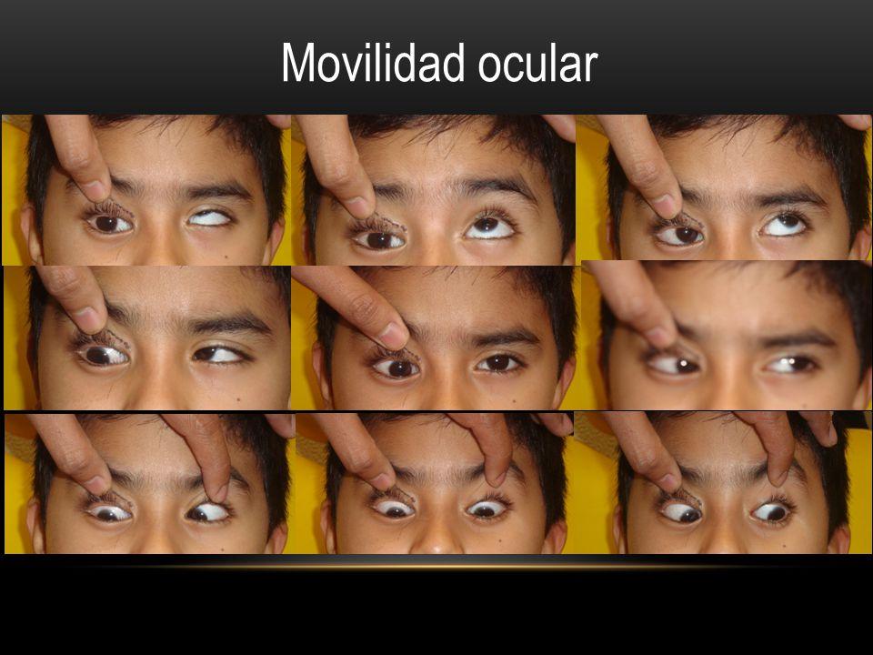 Movilidad ocular