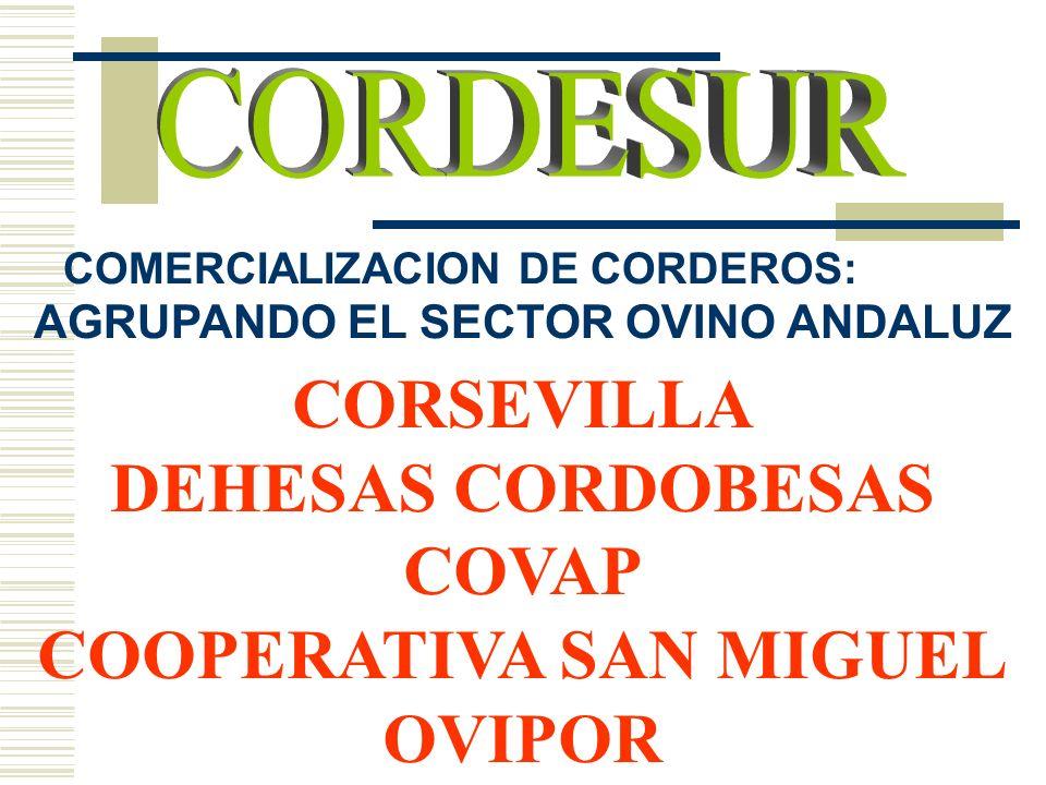 AGRUPANDO EL SECTOR OVINO ANDALUZ COOPERATIVA SAN MIGUEL