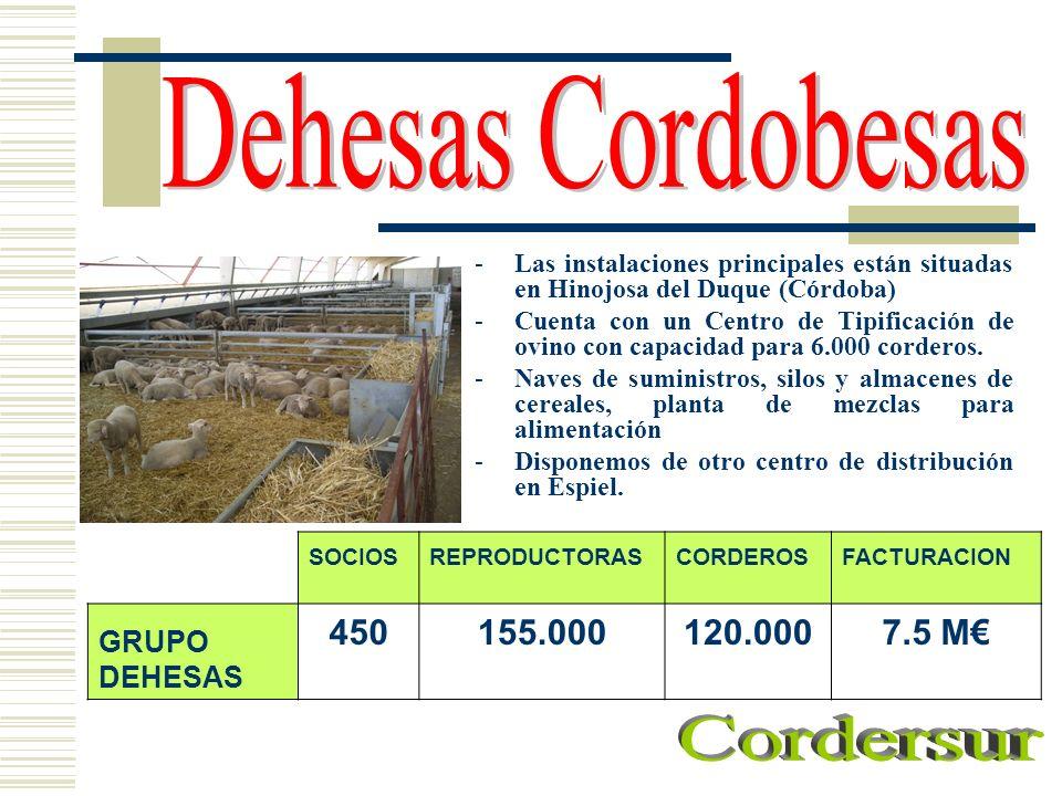 Dehesas Cordobesas Cordersur 450 155.000 120.000 7.5 M€ GRUPO DEHESAS
