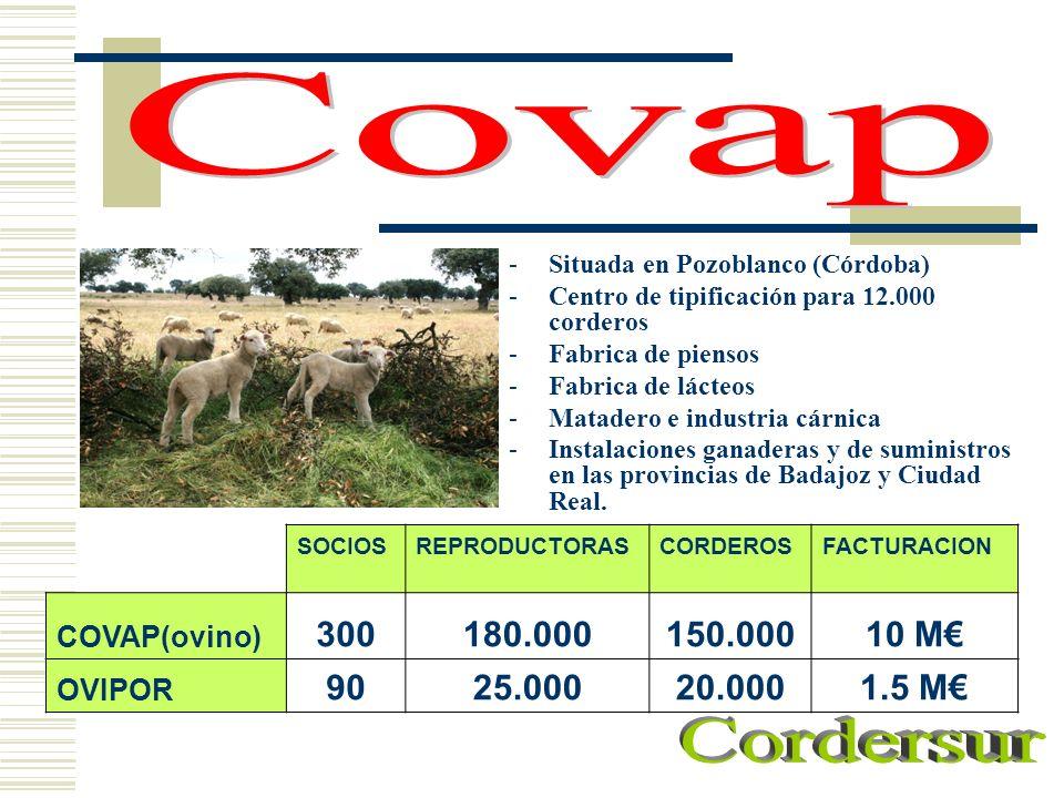 Covap Situada en Pozoblanco (Córdoba) Centro de tipificación para 12.000 corderos. Fabrica de piensos.