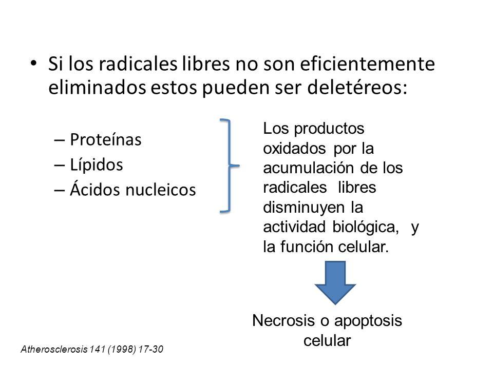 Necrosis o apoptosis celular