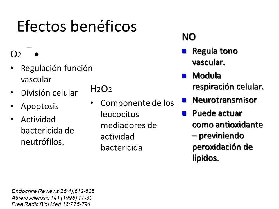 Efectos benéficos NO O2  H2O2 Regula tono vascular.