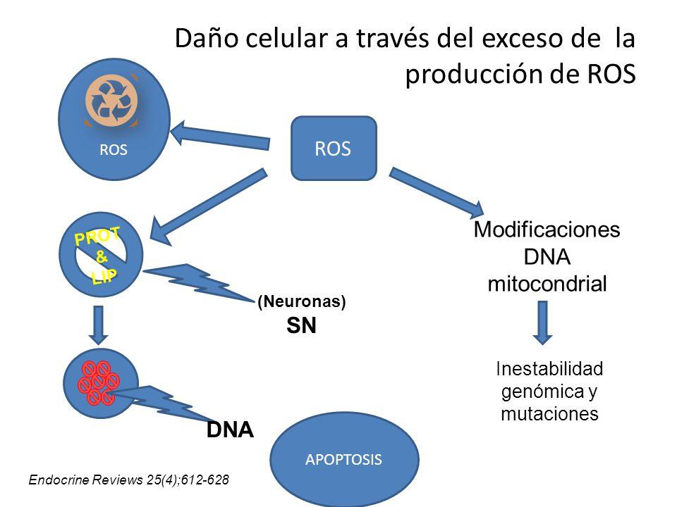 Daño celular a través del exceso de la producción de ROS
