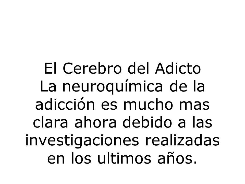 El Cerebro del Adicto La neuroquímica de la adicción es mucho mas clara ahora debido a las investigaciones realizadas en los ultimos años.