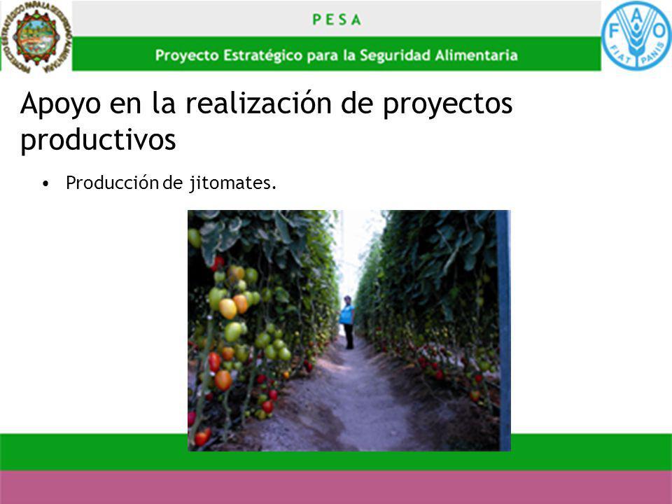 Apoyo en la realización de proyectos productivos