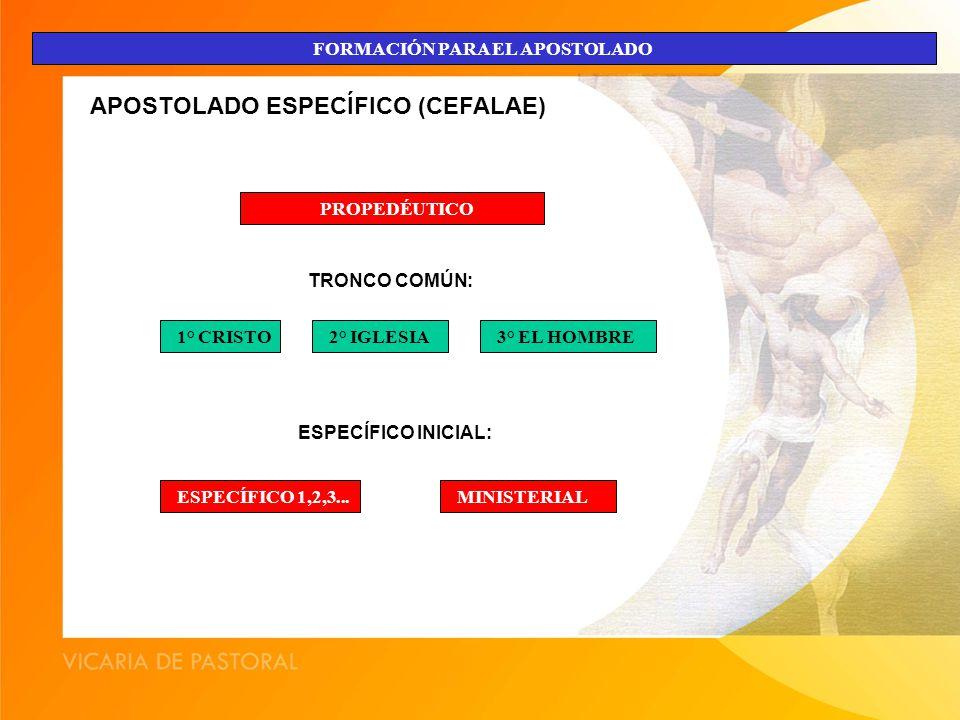 APOSTOLADO ESPECÍFICO (CEFALAE)