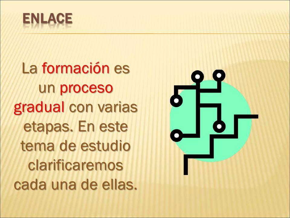 ENLACE La formación es un proceso gradual con varias etapas.