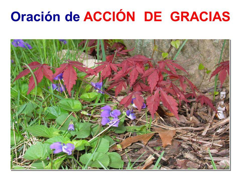 Oración de ACCIÓN DE GRACIAS