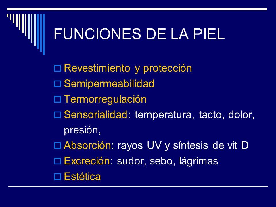 FUNCIONES DE LA PIEL Revestimiento y protección Semipermeabilidad