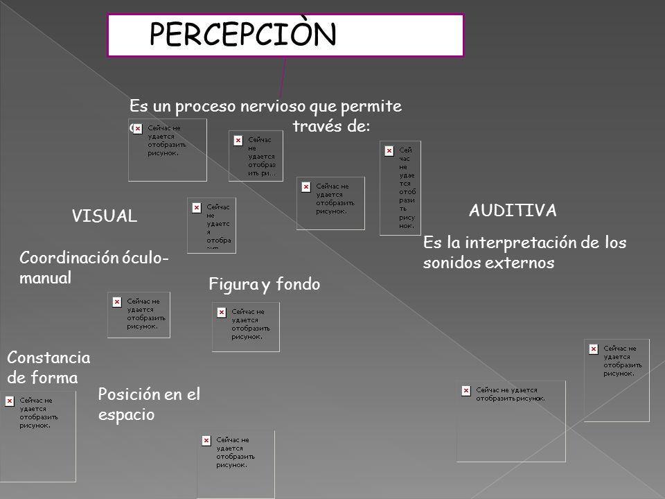 PERCEPCIÒN Es un proceso nervioso que permite a través de: AUDITIVA