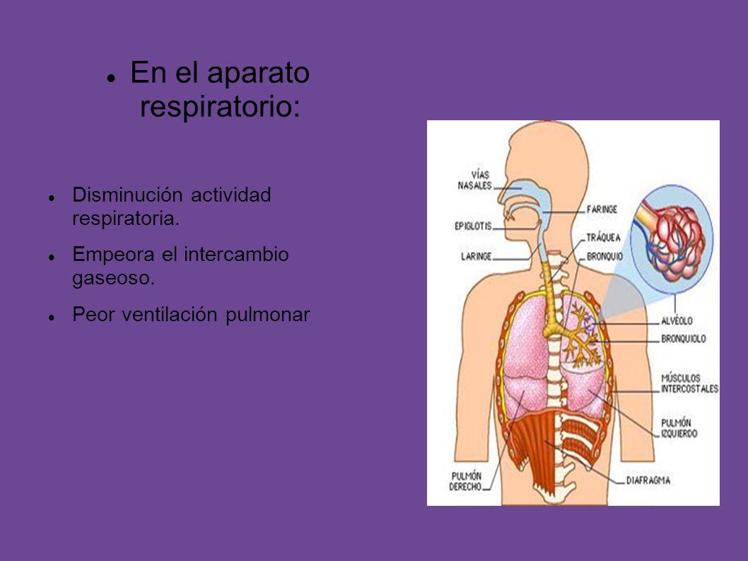 En el aparato respiratorio:
