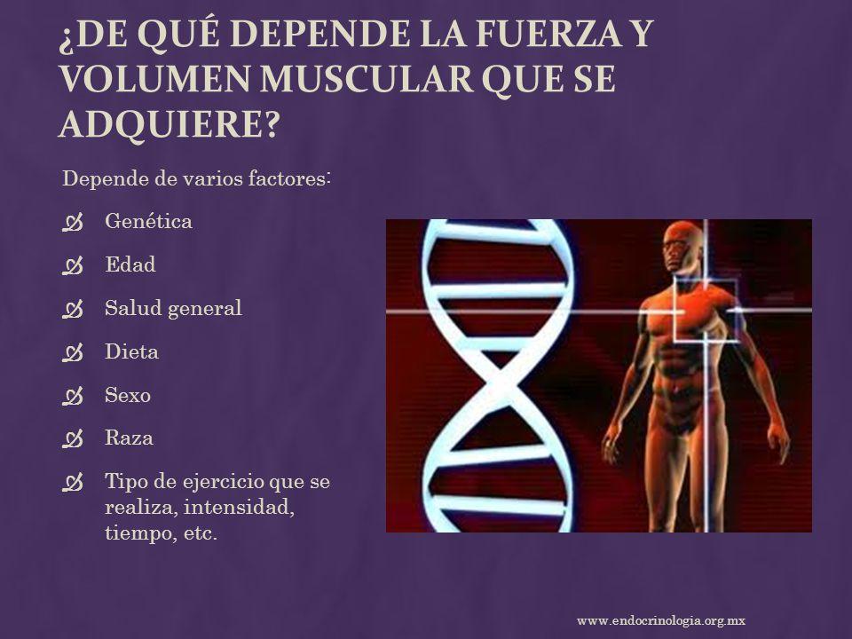 ¿De qué depende la fuerza y volumen muscular que se adquiere