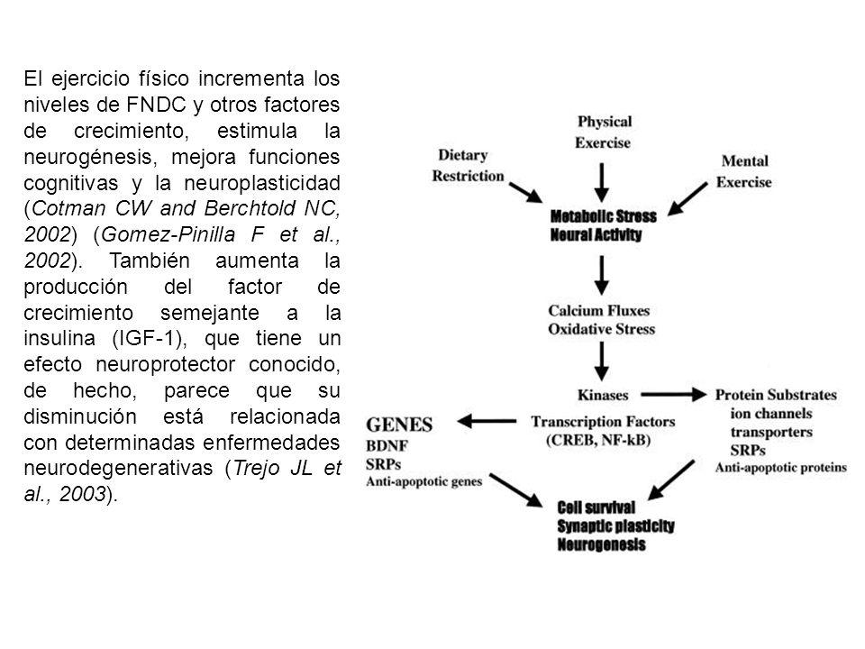 El ejercicio físico incrementa los niveles de FNDC y otros factores de crecimiento, estimula la neurogénesis, mejora funciones cognitivas y la neuroplasticidad (Cotman CW and Berchtold NC, 2002) (Gomez-Pinilla F et al., 2002).