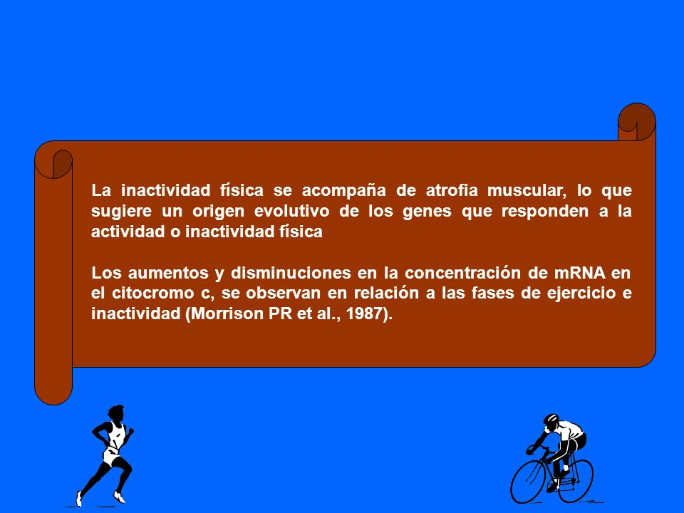 La inactividad física se acompaña de atrofia muscular, lo que sugiere un origen evolutivo de los genes que responden a la actividad o inactividad física
