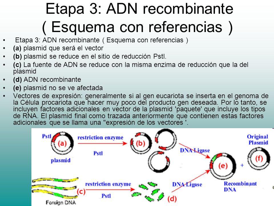 Etapa 3: ADN recombinante ( Esquema con referencias )