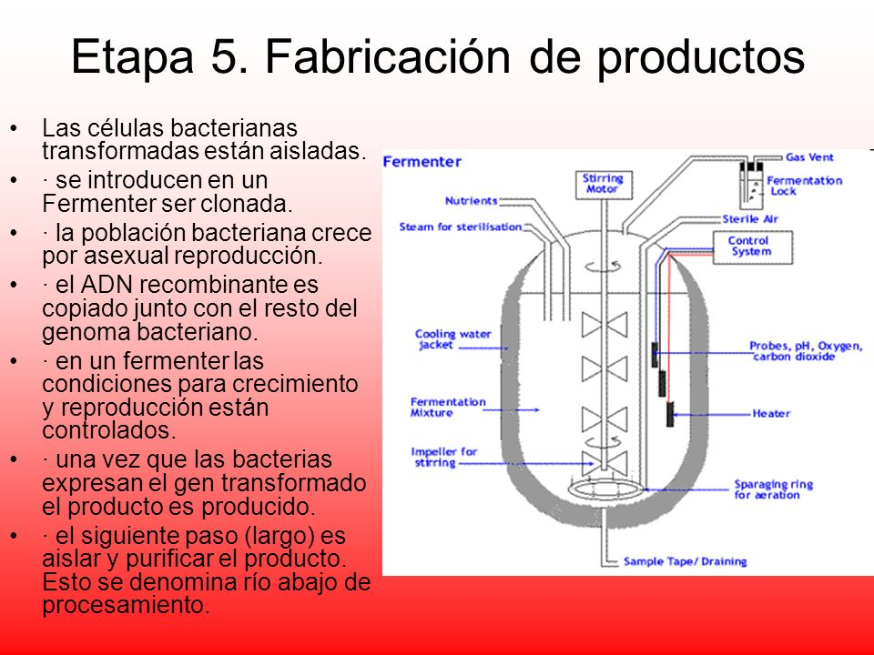 Etapa 5. Fabricación de productos