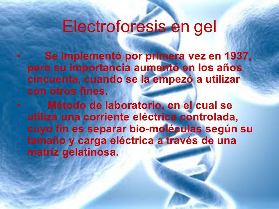Electroforesis en gel