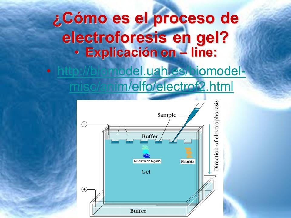 ¿Cómo es el proceso de electroforesis en gel