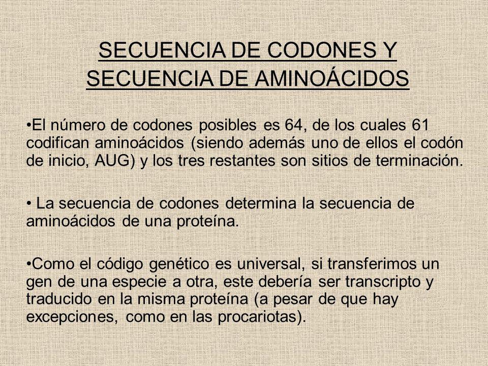 SECUENCIA DE AMINOÁCIDOS