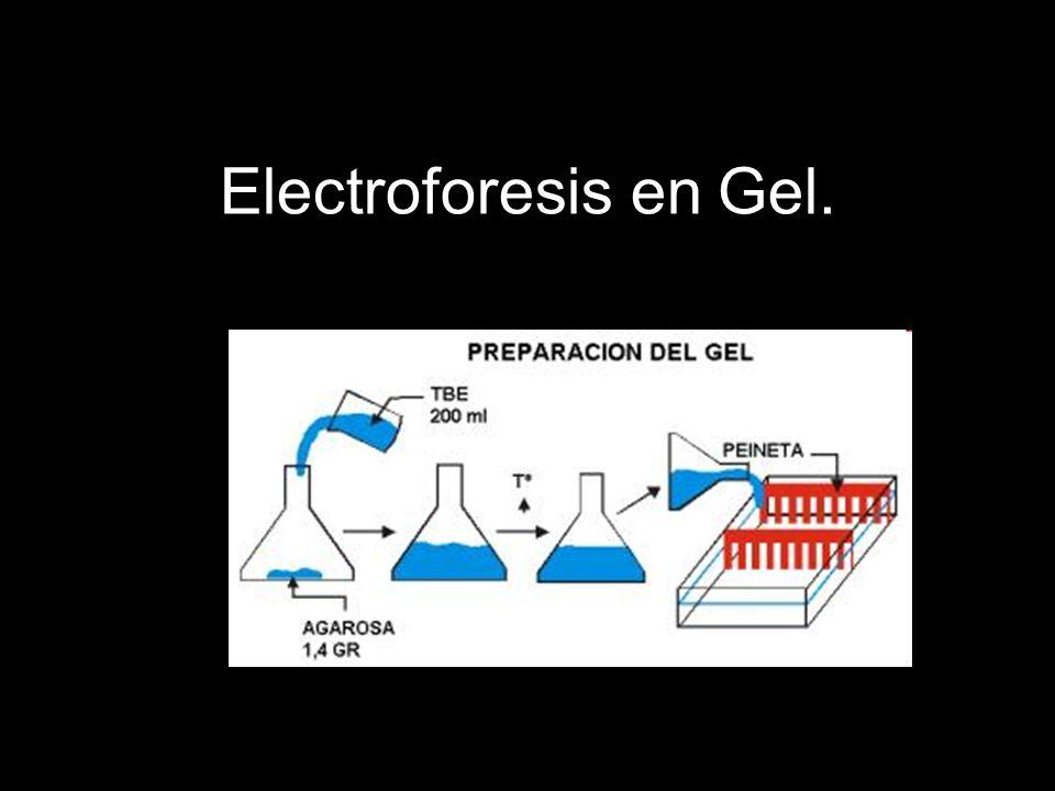 Electroforesis en Gel.