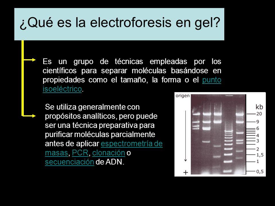 ¿Qué es la electroforesis en gel