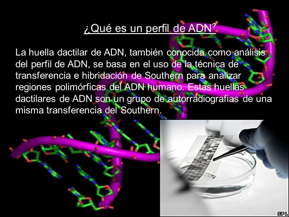 ¿Qué es un perfil de ADN