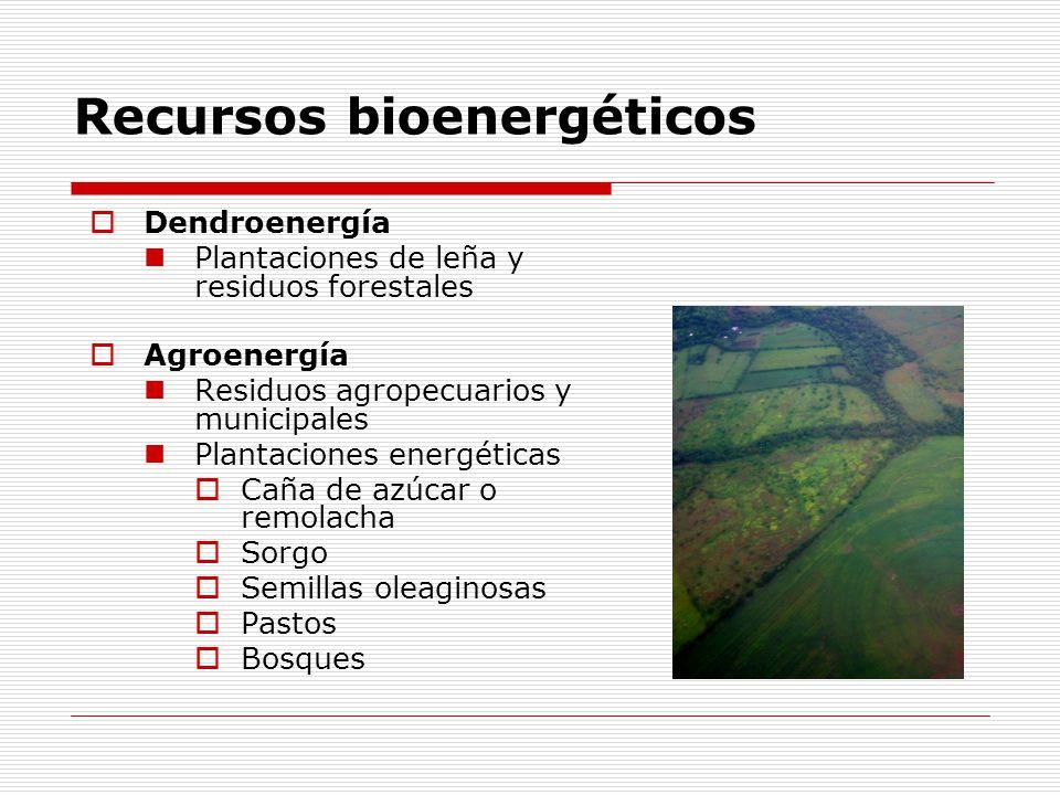 Recursos bioenergéticos