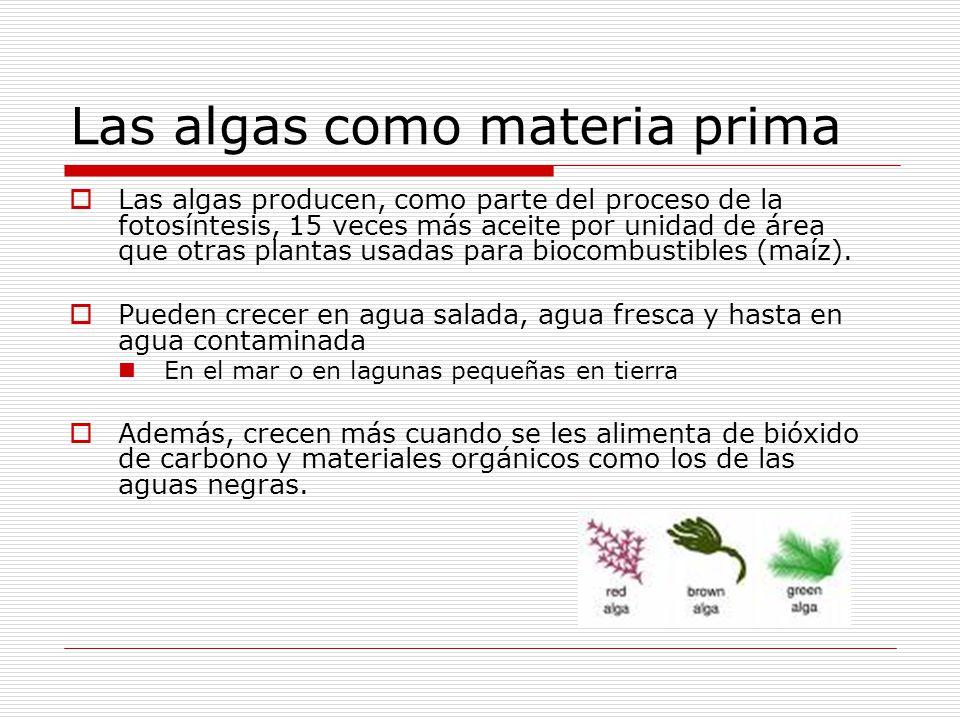 Las algas como materia prima