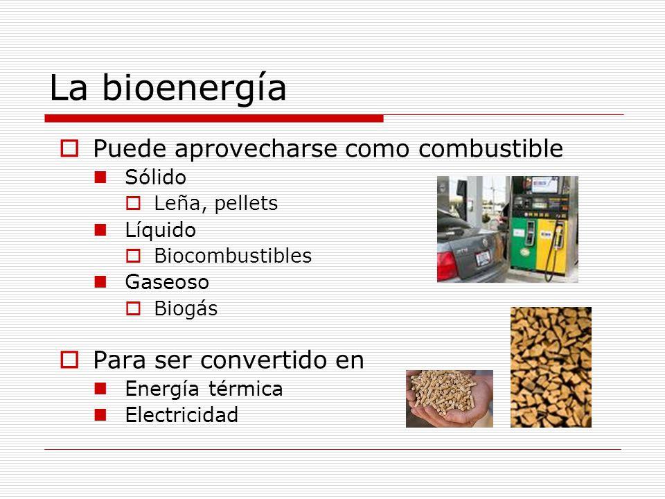 La bioenergía Puede aprovecharse como combustible
