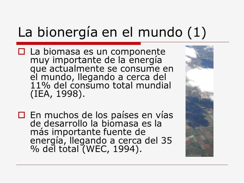 La bionergía en el mundo (1)