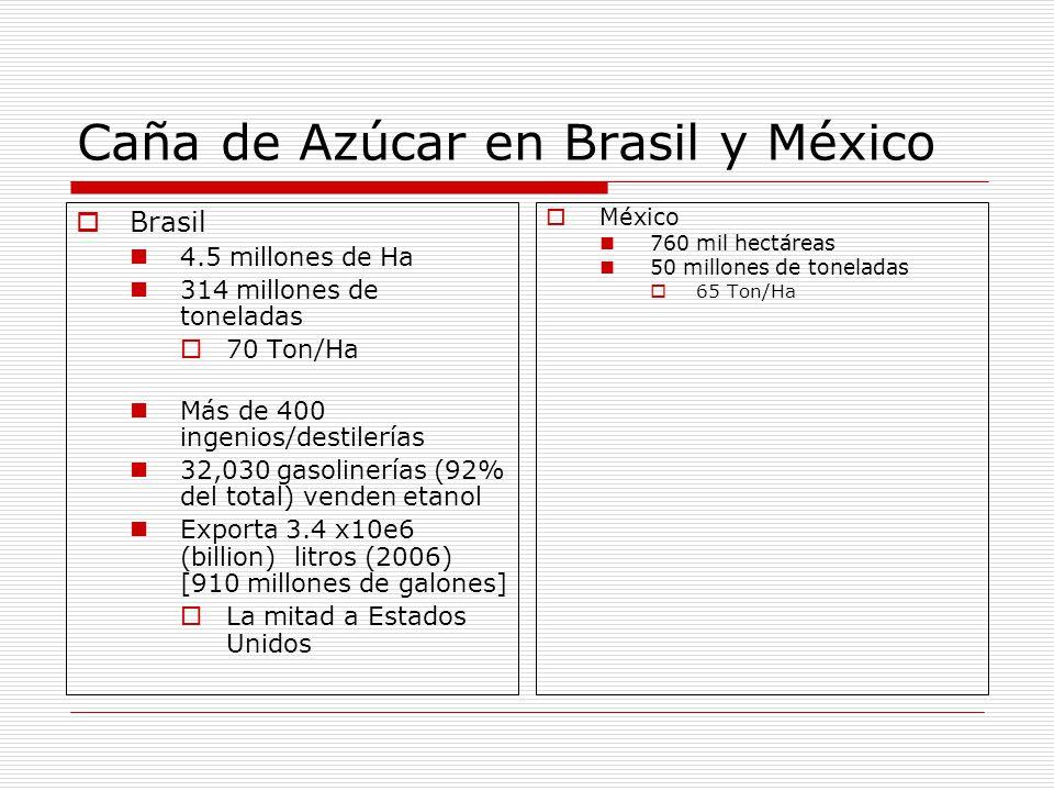 Caña de Azúcar en Brasil y México
