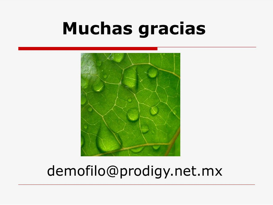 Muchas gracias www.funtener.org demofilo@prodigy.net.mx