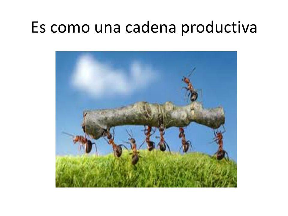 Es como una cadena productiva