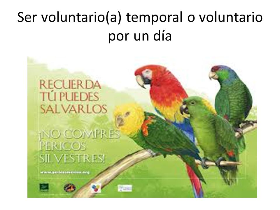 Ser voluntario(a) temporal o voluntario por un día
